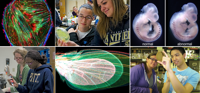 undergraduate biology dissertation topics